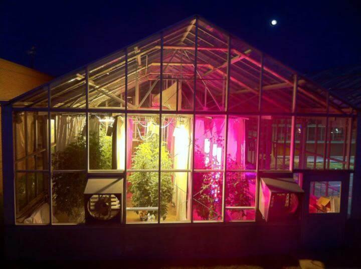 Trồng cà chua bằng đèn led quang hợp