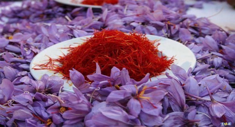 Nhụy hoa Saffron